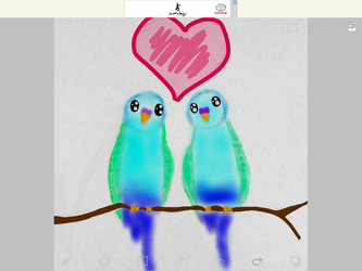 Budgie love by Piplup733