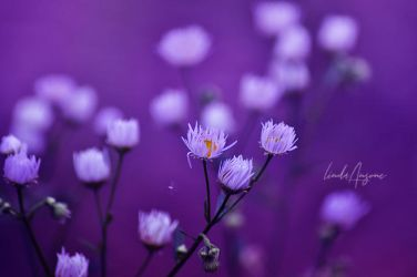 delicate 2 by LindaMarieAnson