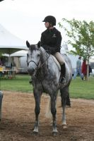 Horse Show Stock 25 by DancingFoxie