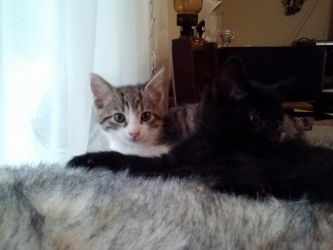 New Kittens - Sookie and Tara by Ahkward