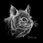 Cat by Owlis
