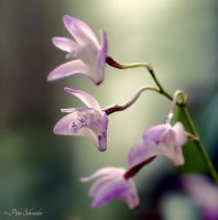 Tender beauty. by Phototubby