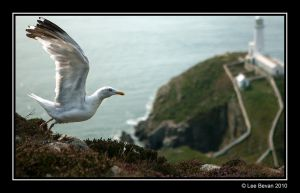 Seagull by Leeby