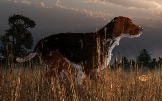Old Hunting Dog by deskridge