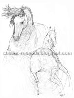 Horse drawings by susysann