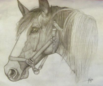 Horse Portrait by TeaAndIntrigue