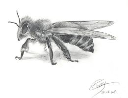 -bee- by magur