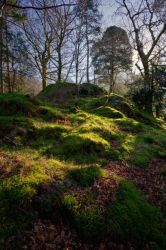 Mossy Woods by scotto