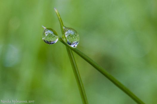 Morning Dew by amrodel