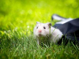 Hamster by photoplace