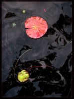 The Water Lily by magikfoto