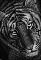 1st attempt at scratchboard by rasberry6