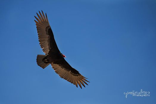 Soaring To New Heights by lanephotography