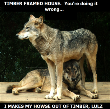 I can has timber frame house? by calistamonkey