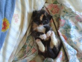 Tilly the Tortoiseshell by StephDragonness