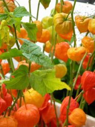 chinese lanterns by amitm123