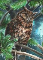 Watercolour Owl - Asio otus by Kaos-Nest