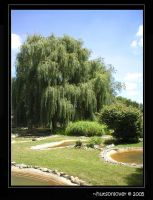 Willow Tree by hutsonlover