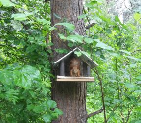 Squirrel's shelter from the rain by TiElGar