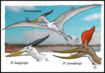 Pteranodon species by zakafreakarama