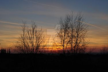 Trees in sunset by Lovunka
