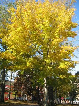 Tall Fall Tree by InstitutionalizedEmo