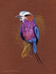 lilac breasted roller by poseidonsimons
