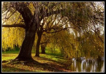 Autumn In The Park by AdamsWife