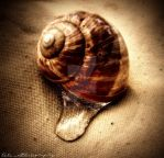 watered snail by alifuhrer