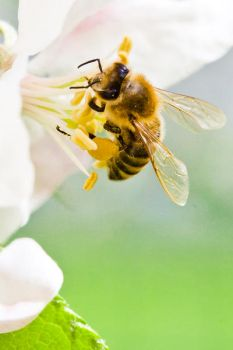 Honey Bee by JustHoldMe