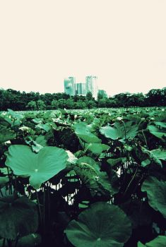 lotus in the city by eooes