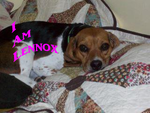 I am Lennox-Pic 1 by DucklettsRcute