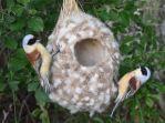 Needle felted Eurasian penduline tits 2 by Hillamer
