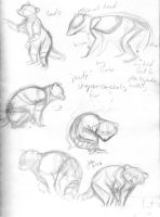 Raccoon Notes And Sketches by elipse