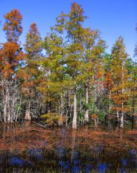The Lake of Trees 2 by ILoveVacStock