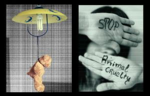 Stop Animal Cruelty by decayedbeauty91