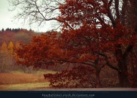 The Red Tree by kuschelirmel-stock