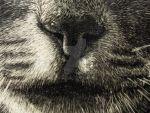 Cat Nose by Rathsi