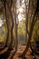 Trough the trees by MarcosRodriguez