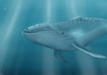 Humpback by Clairey-kun