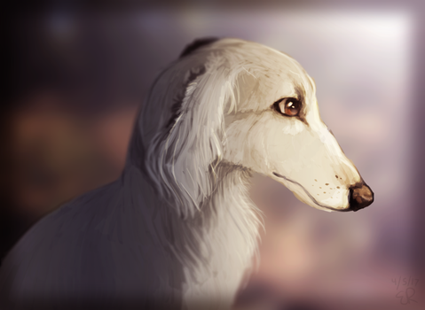 Borzoi by fairyleaf