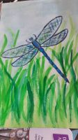 dragonfly  by TaitGallery