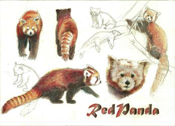 Support Red Pandas by Dominish