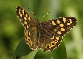first butterfly this year on my camera by marob0501