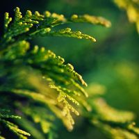 Soft Green by MarcoHeisler
