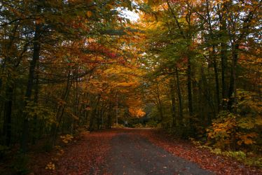 camp road in october by screenname911