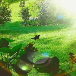 Flying Hummingbird by Eterza