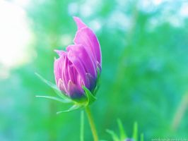 budding spring by sataikasia