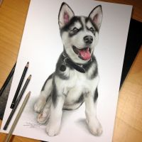 Puppy Pencil Drawing by AtomiccircuS