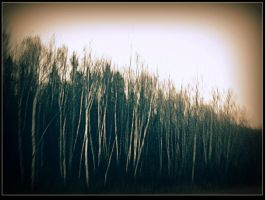 Leafless Trees by surrealistic-gloom